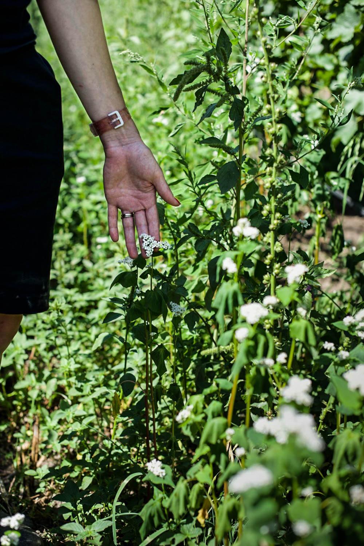 a woman hand touching cover crops in an organic vineyard